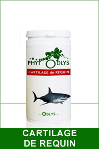 cartilage requin